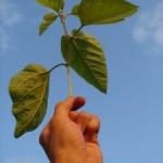 Outsourcing: La externalización como clave del desarrollo empresarial